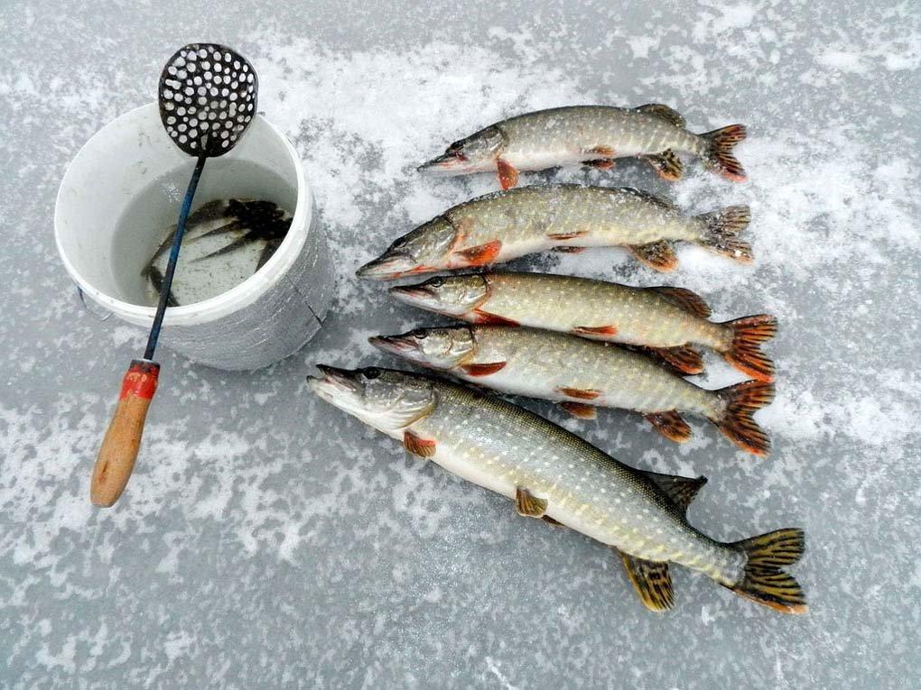 Рыбалка на озере Янисъярви