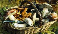 грибы карелии